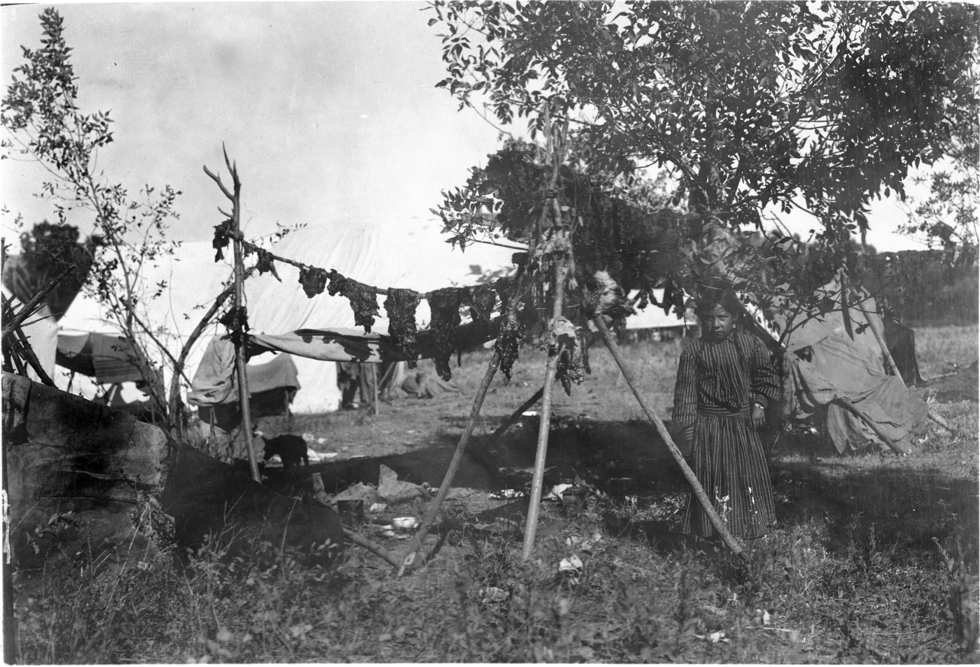 Crow Nation girl next to a pole of drying meat 1908.