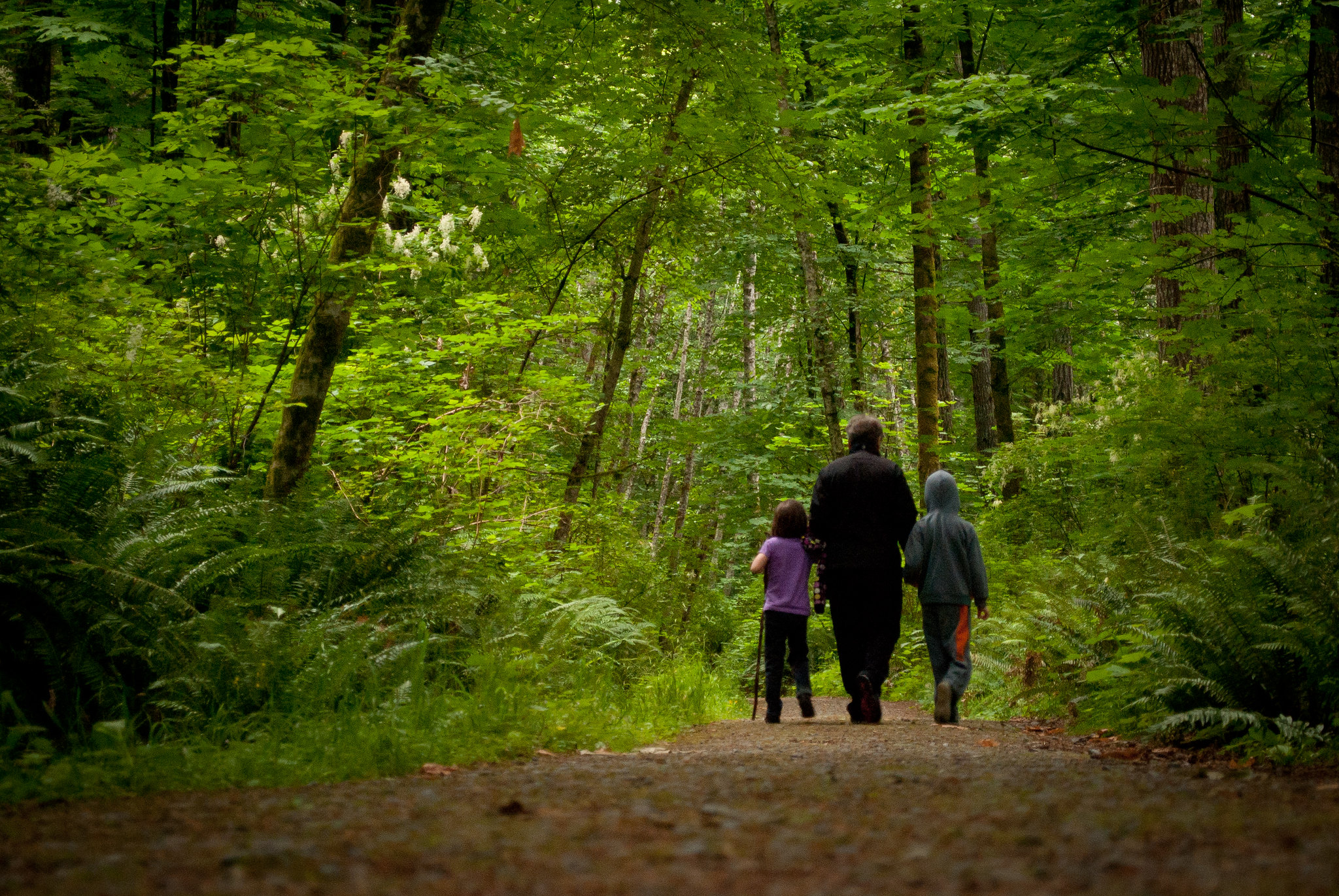 Walk in the forest. Two young children with their grandmother, BC.