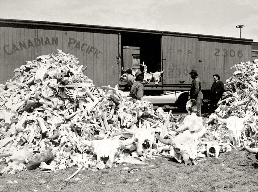 Bison Skeletons, Gulf Lake, SK, circa 1890's (Ref. 17161); Credits to: Canadian Pacific Railway.