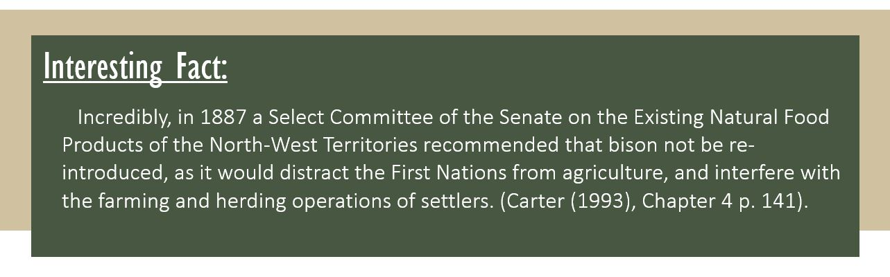 Interesting Fact: Incredibly, in 1887 a Select Committee of the Senate on the Existing Natural Food Products of the North-West Territories recommended that bison not be re-introduced, as it would distract the First Nations from agriculture, and interfere with the farming and herding operations of settlers. (Carter (1993), Chapter 4 p. 141).