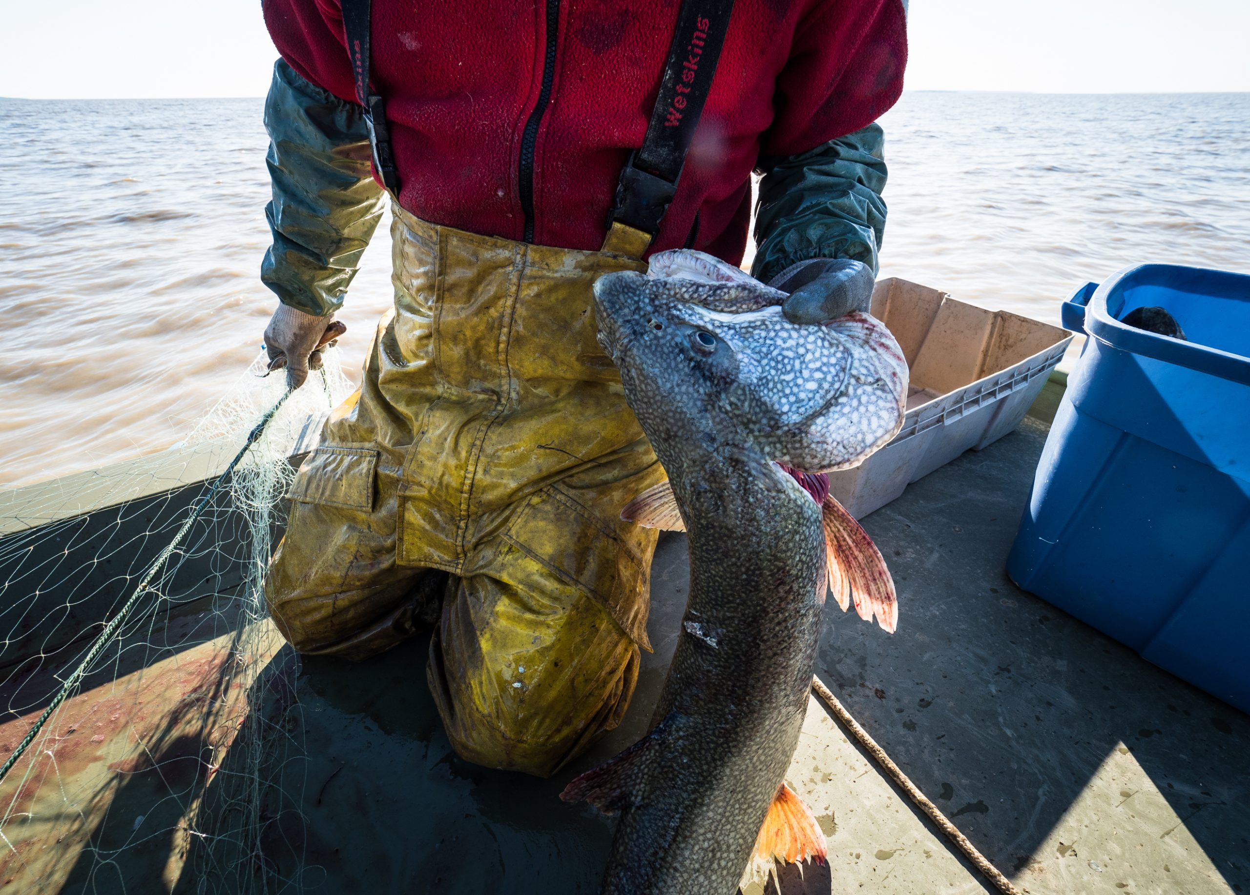 Robert Grandjambe pulling a lake trout from his nets in Lake Athabasca near Fort Chipewyan First Nation. Attributed to: Louis Bockner/ Sierra Club BC. (CC BY-NC 2.0) [159]