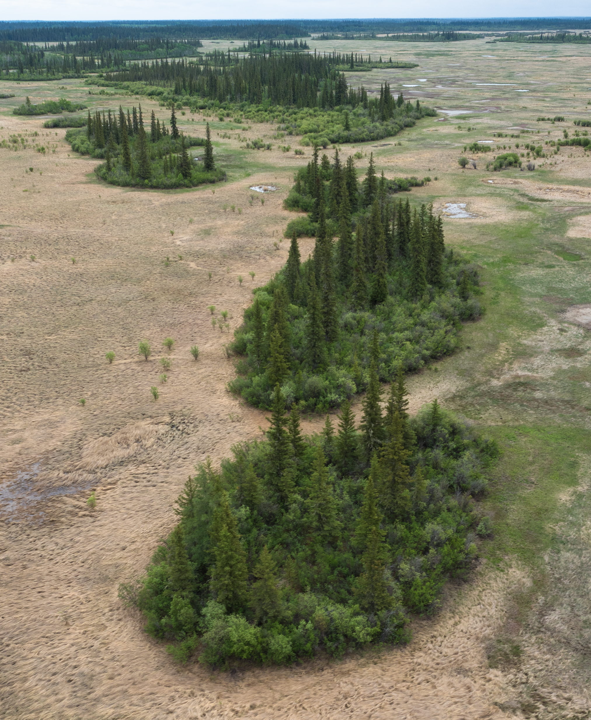Tree islands, evidence of lowering water levels in Wood Buffalo National Park. Credits to: Louis Bockner/Sierra Club BC (CC BY-NC 2.0) [156]Tree islands, evidence of lowering water levels in Wood Buffalo National Park. Credits to: Louis Bockner/Sierra Club BC (CC BY-NC 2.0) [156]