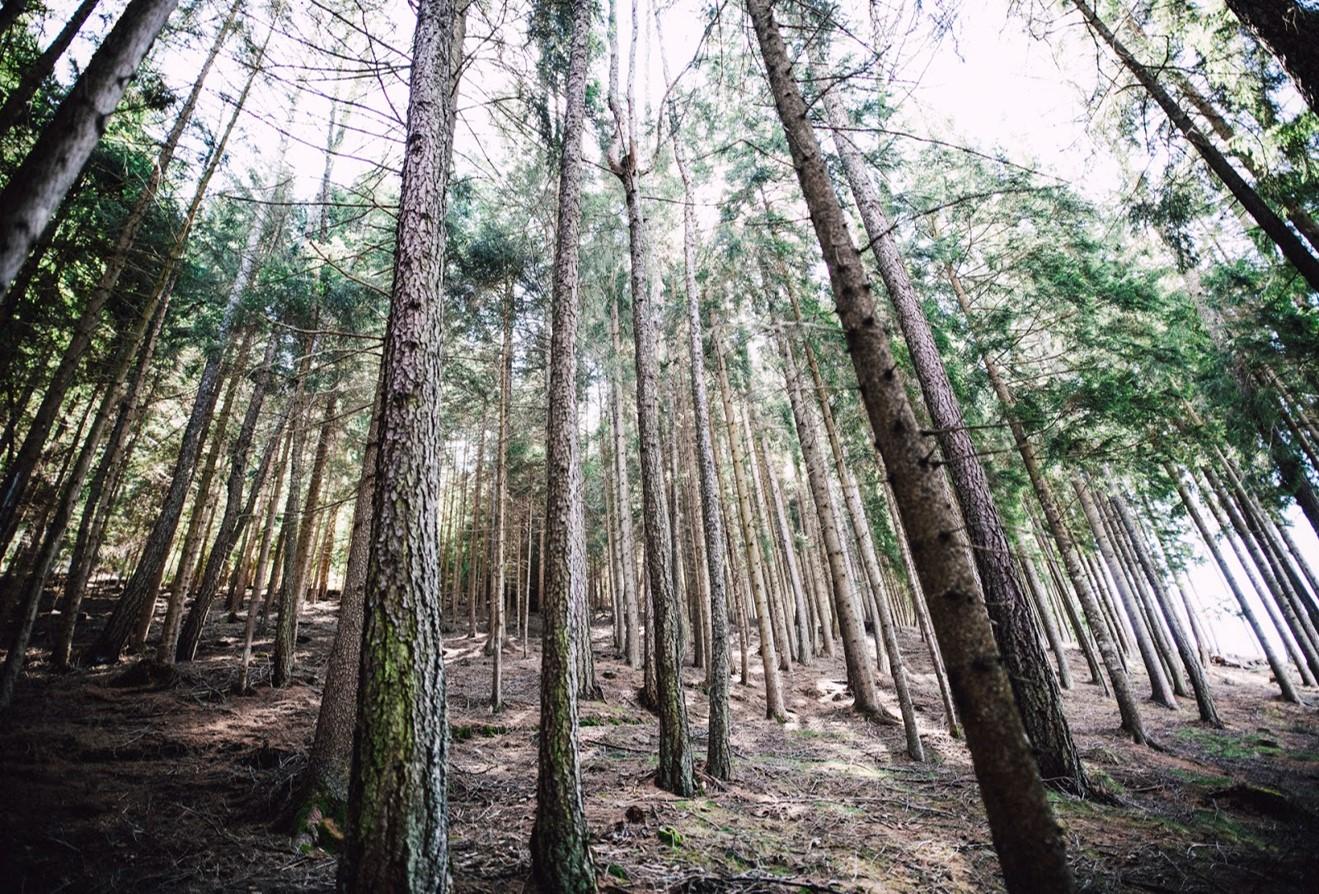 Forestry. Photo credits to: Markus Spiske (Public Domain) [161]