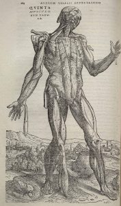 Anatomical drawing from 1543