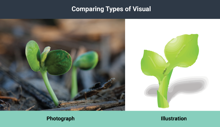 A photograph of a green sprout next to the illustration of the same.
