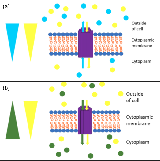 Figure depicting antiport and symport