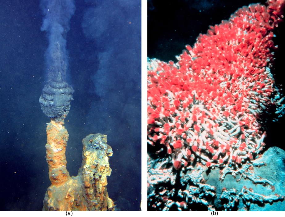 (a) Photograph depicting a hydrothermal vent, which is a crack in the Earth's crust, from which superheated gases emerge. (b) Photograph of tube worms that are unique to hydrothermal vent ecosystems.