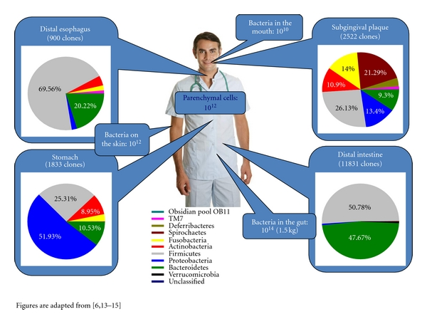 A photograph of a man with pie charts identifying the sites that are colonized by microbes, and the differing types of microbes in each as well as their relative percentages. The differences likely reflect the differing physiological and chemical conditions at each site.