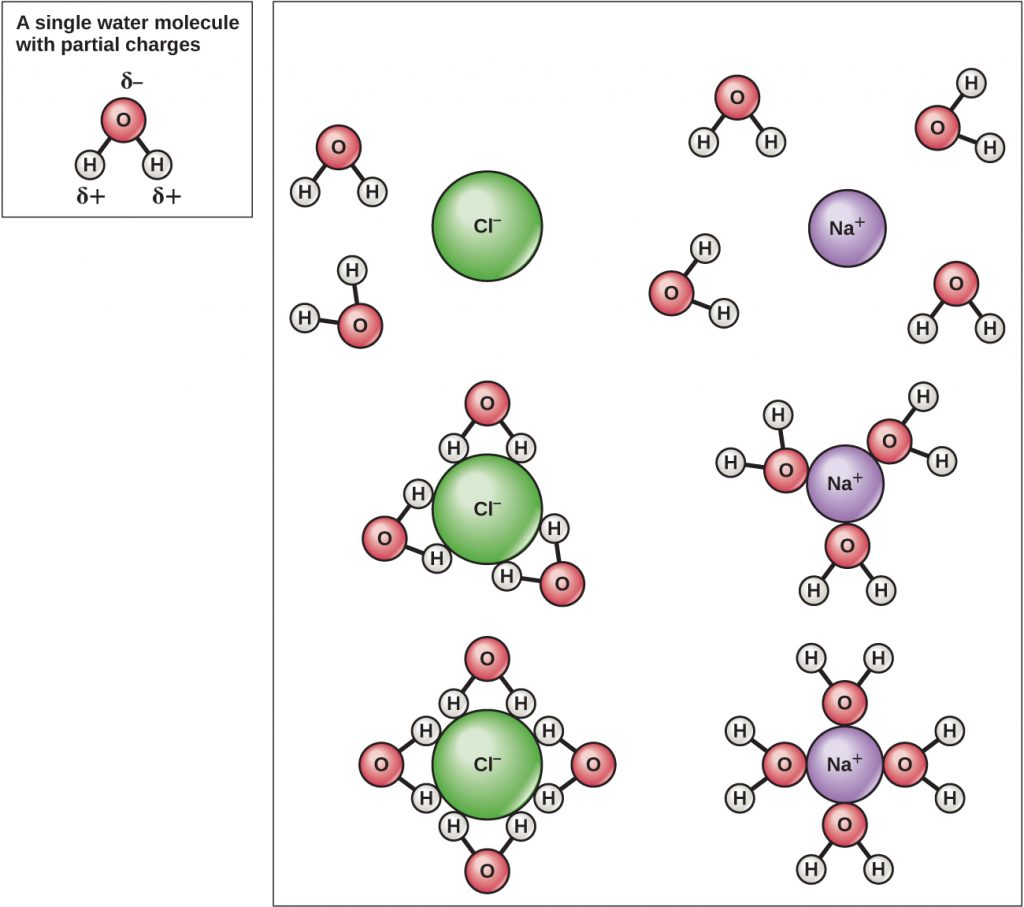 """A water molecule is shown with positive charges on the hydrogen atoms and a negative charge on the oxygen atom; it is labeled """"a single water molecule with partial charges."""" A chlorine ion and a sodium ion are shown surrounded by water molecules. The hydrogen atoms of the water molecules are attracted to the chlorine ion, while the oxygen atoms of the water molecules are attracted to the sodium ions."""
