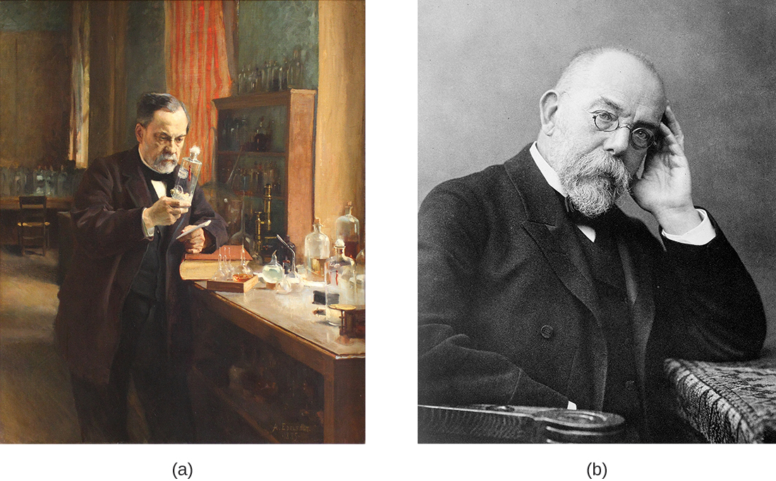 Panel a is a photo of Louis Pasteur, credited with numerous innovations that advanced the fields of microbiology and immunology. Panel b depicts Robert Koch, a man who identified the bacterial causes of anthrax, cholera, and tuberculosis.