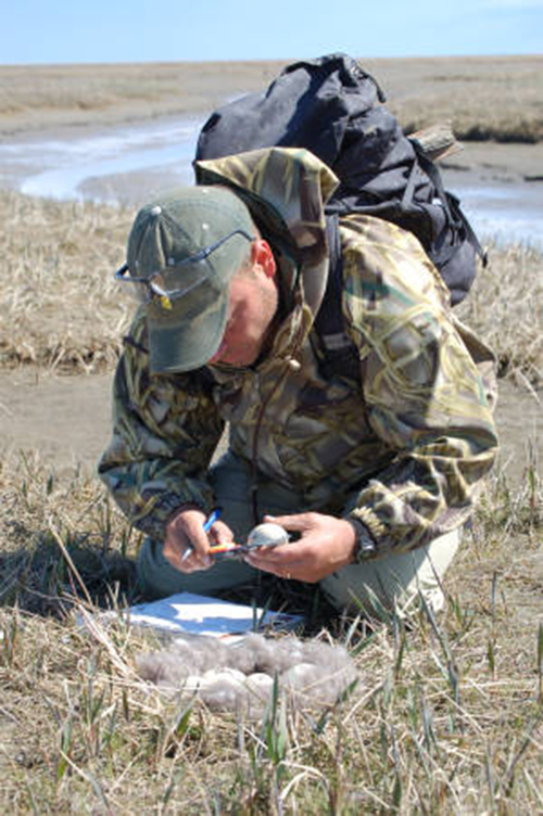 A person in a field measuring an egg.