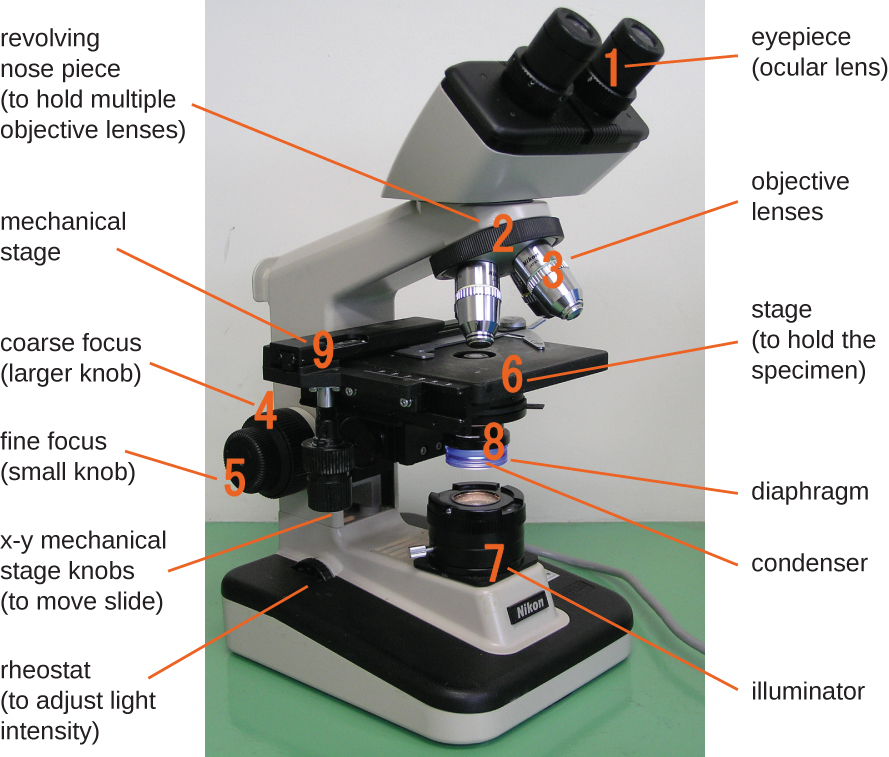 A photo of a microscope is shown with all of the various parts labelled.