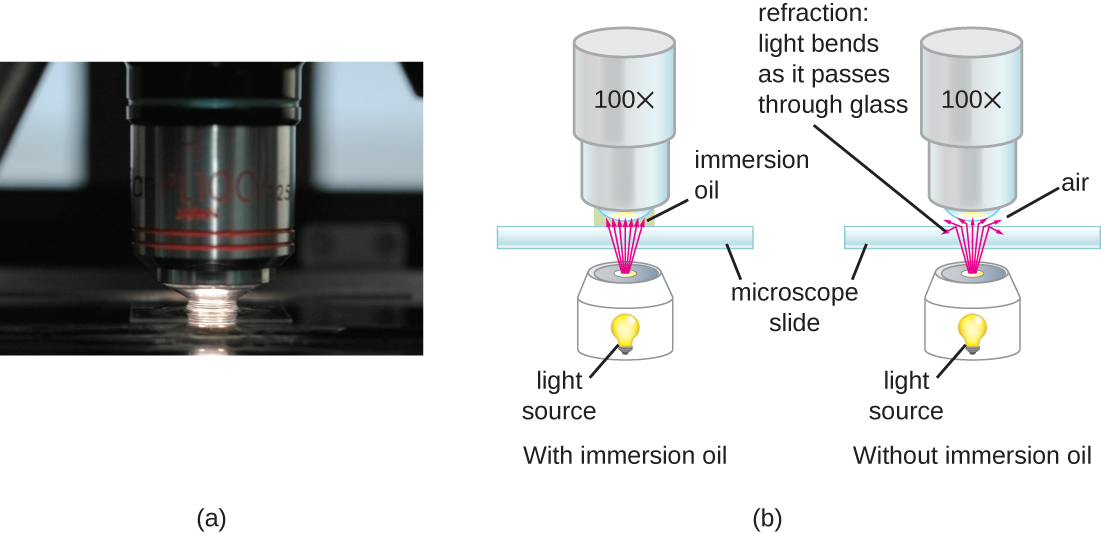 Photograph a shows a close-up of a lens from a brightfield microscope. The lens is nearly touching the slide below it and there is oil spanning the space between the lens and the slide. Diagram b shows the reduction of light refraction as it travels through the immersion oil, compared to traveling through air.