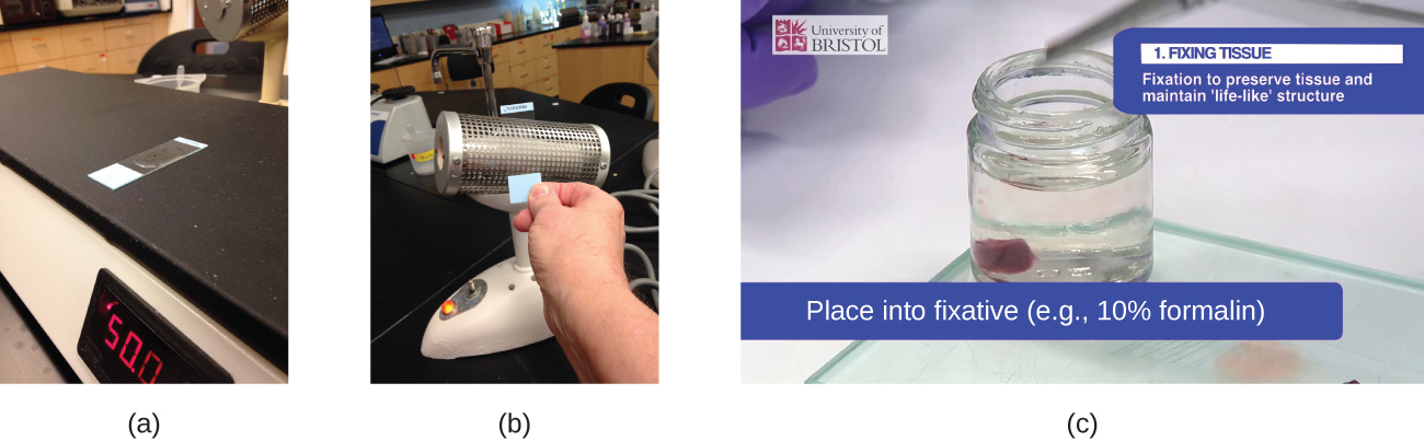 Photograph a shows a slide sitting on a flat heating surface. Photograph b shows a person heat-fixing a slide with an incinerator.