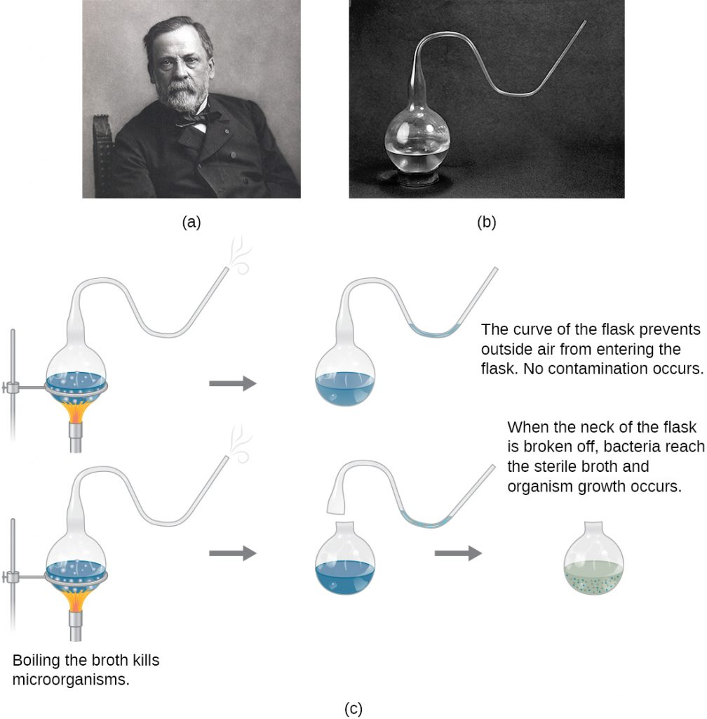 a) Photo of Louis Pasteur b) Photo of Pasteur's swan-necked flask, c) A drawing of Pasteur's experiment that disproved the theory of spontaneous generation.