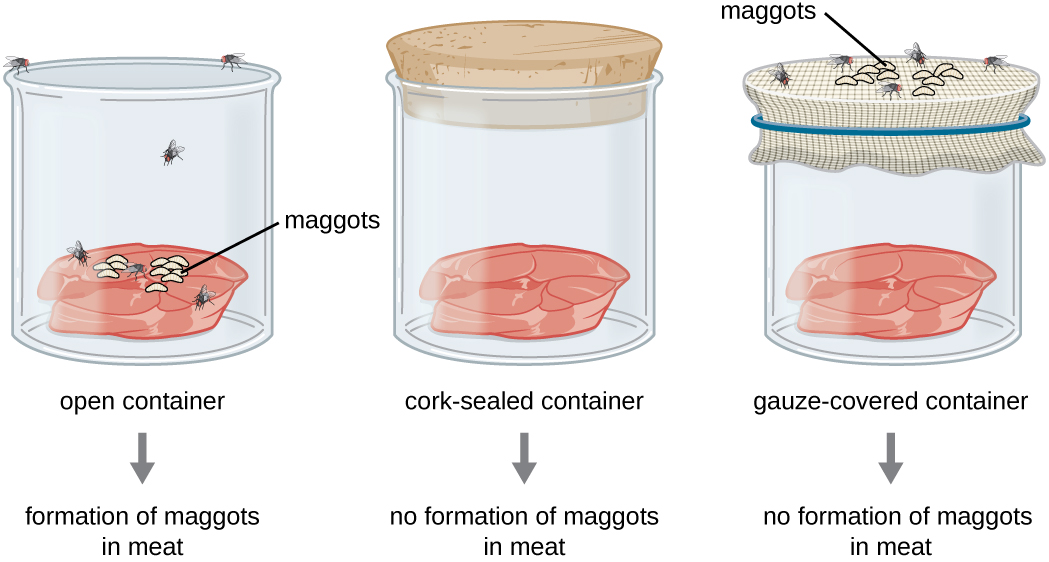 An open container with meat has flies and the formation of maggots in meat. A cork-sealed container of meat has no flies and no formation of maggots in meat. A gauze covered container of meat has flies and maggots on the surface of the gauze but no maggots in the meat.