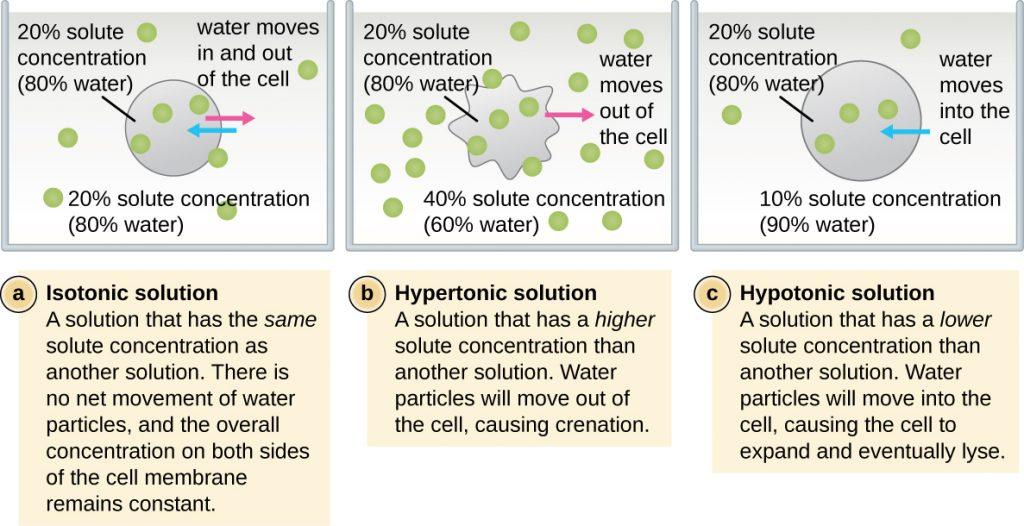 3 3 Unique Characteristics of Prokaryotic Cells
