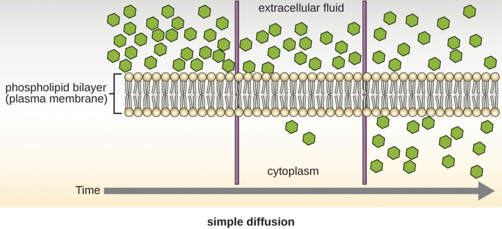 A diagram of simple diffusion.