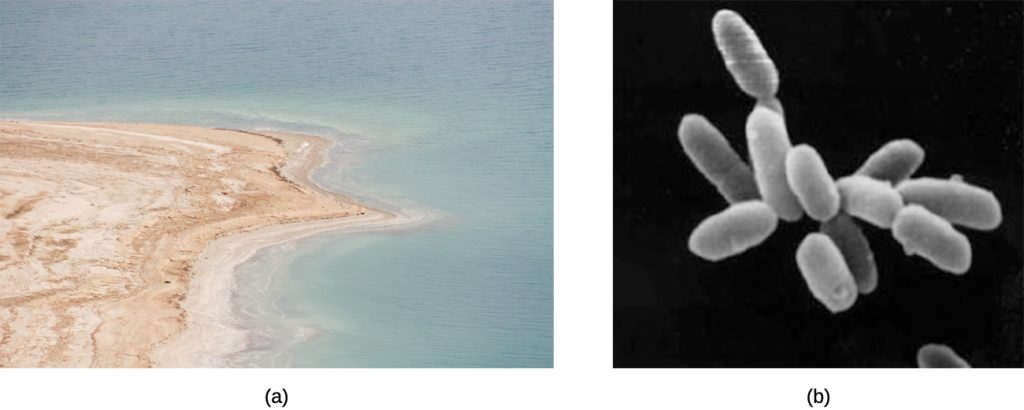 a) A photo of blue water and red sand. B) A micrograph of a cluster of rod shaped cells.