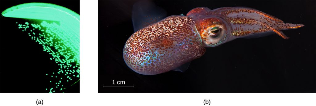 a) A photograph of shining green dots on a black backround. B) A photograph of a glowing squid.