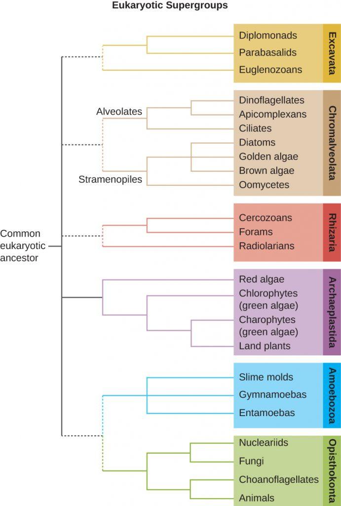 5 1 Unicellular Eukaryotic Parasites – Microbiology