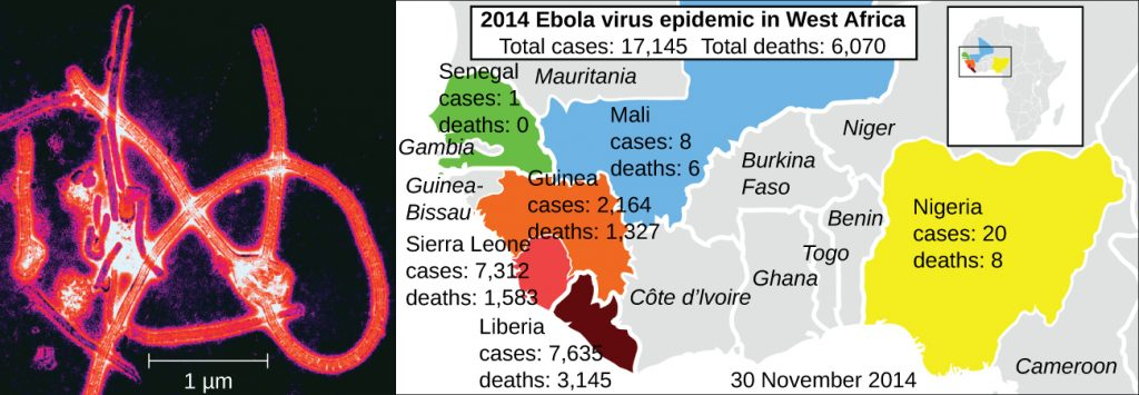 An electron micrograph of Ebola virus and a map depicting the countries of West Africa affected by the Ebola outbreak of 2014.