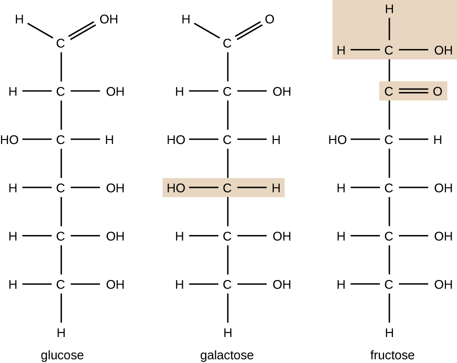 Diagrams depicting the three structural isomers of glucose, galactose and fructose.