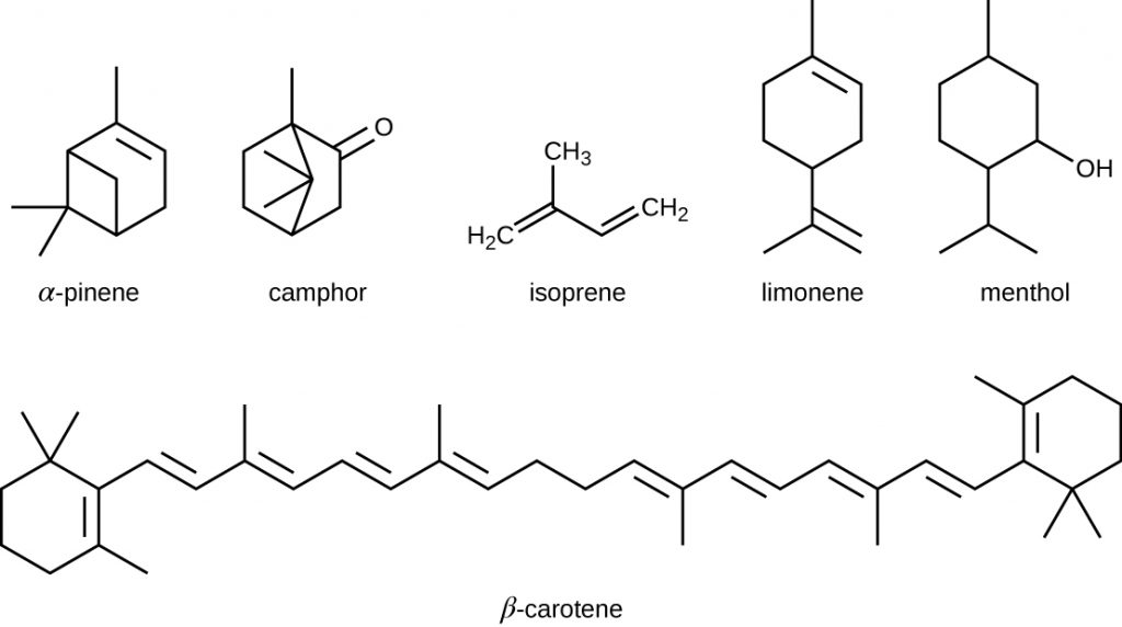 Diagrams of five-carbon isoprene molecules which are chemically modified in various ways to yield isoprenoids.