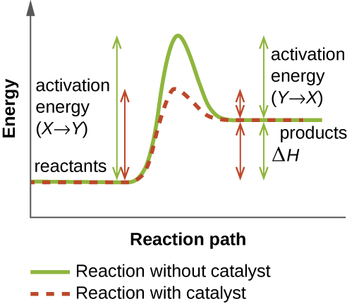 A graph depicting the effect of enzymes on a chemical reaction.