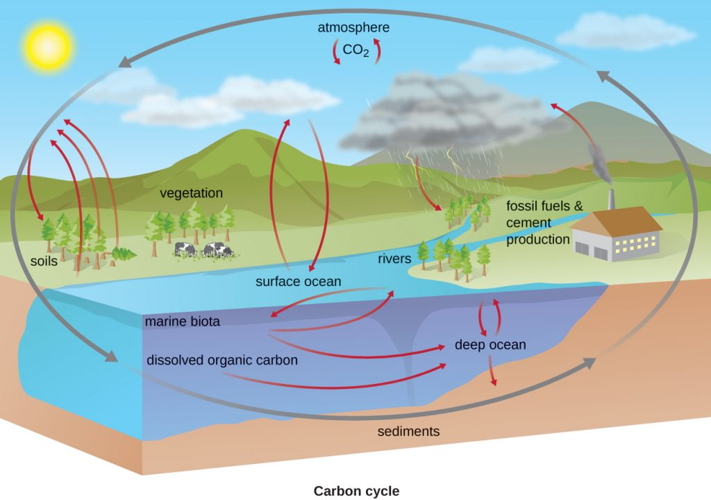 The carbon cycle. CO2 from the atmosphere moves into plants, soils, surface ocean, and rivers. From plants, the carbon moves back to the air. From the water, the carbon moves to marine biota, the deep ocean, and sediments. Carbon also moves back to the air from fossil fuel and cement production.