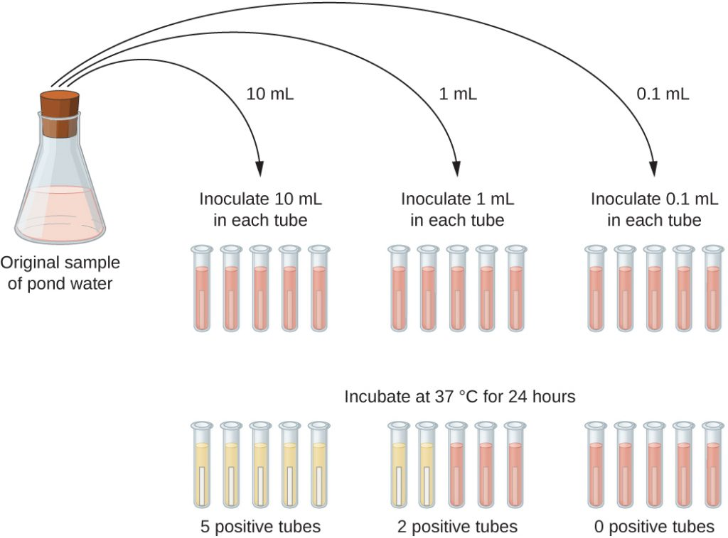 A diagram where the original sample of pond water is diluted into tubes containing lactose broth (a pink broth). 10 mL of the sample is placed into each of 5 lactose broth tubes. Another 5 tubes get 1 mL each of the sample. Another 5 tubes get 0.1 mL of sample. After 24 hours of incubation at 37°C some tubes have a colour change. All of the 5 tubes containing 10 mL of the sample turned yellow and show gas in the smaller inner tube. 2 of the 5 tubes that got 1 mL of the original sample turned yellow and show gas; 3 of these tubes remain pink. All of the tubes that got 0.1 mL of the original sample remain pink.