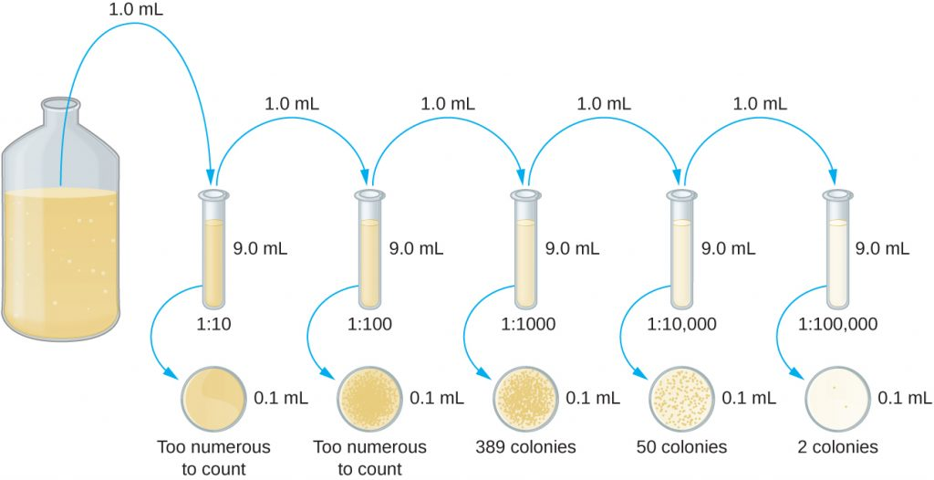 A diagram of serial dilution.