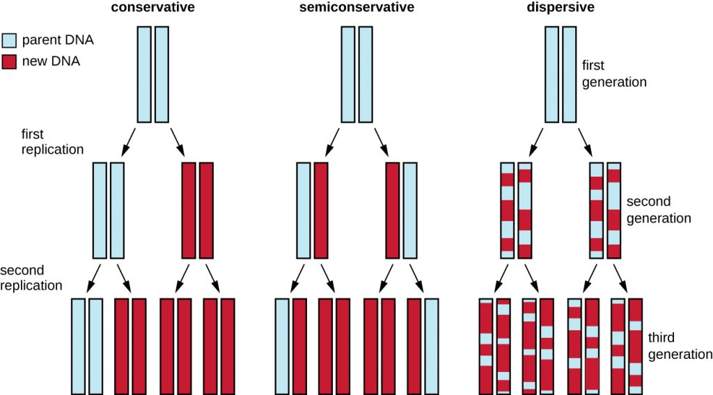 Diagram showing 3 models of DNA replication.