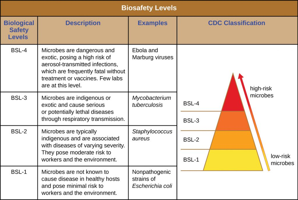Table labeled biosafety levels. The CDC classifies low risk microbes as BSL-1 and high-risk microbes as BSL-4.