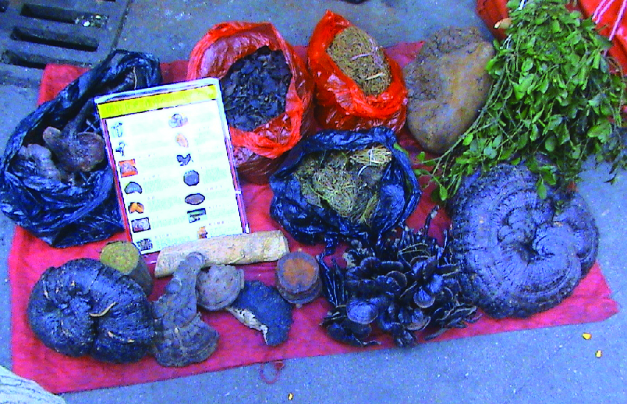 Photo of a variety of plants being sold by a street vendor.