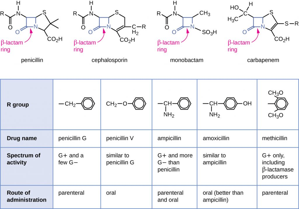 Structures of different antibacterials with β-lactam rings, combined with a table summarizing how the activity of each differs.