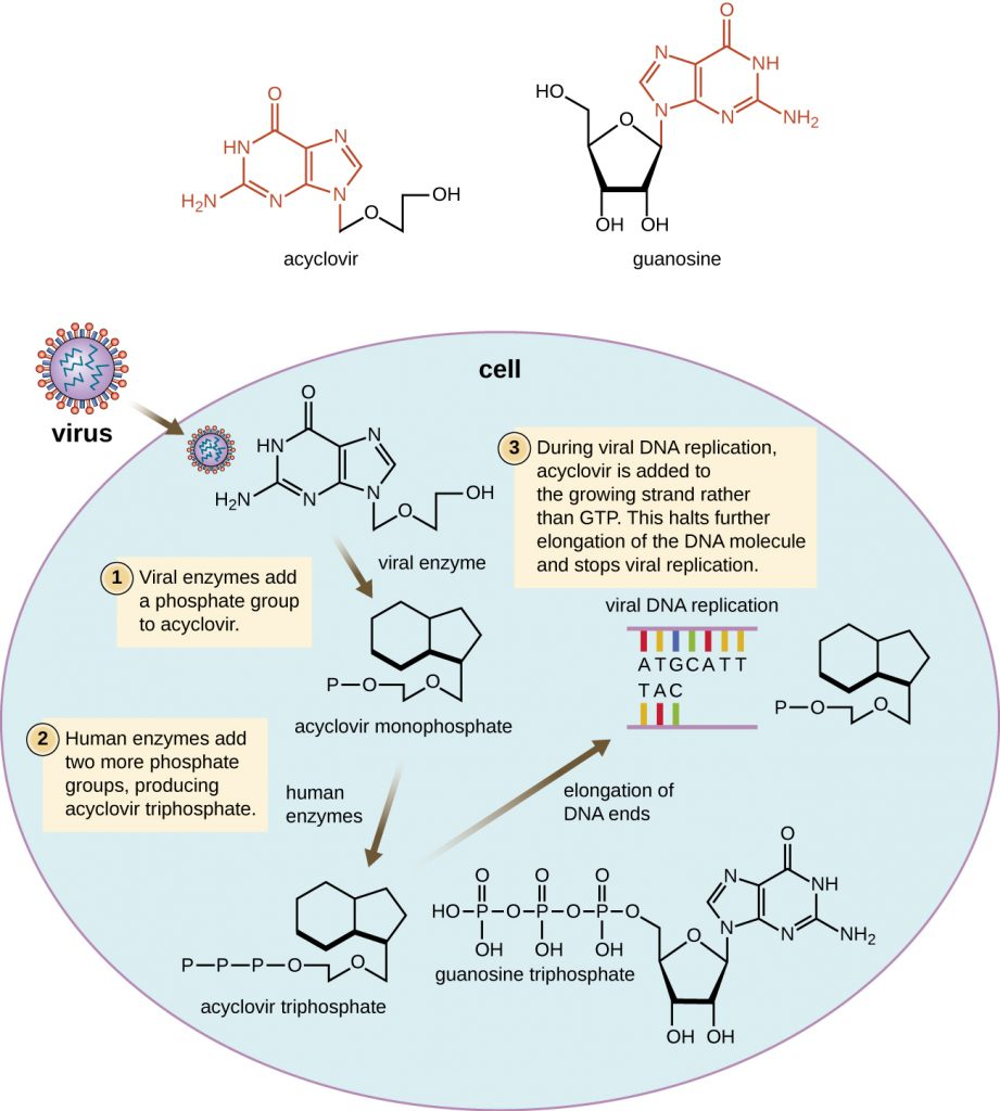 Diagram depicting the function of the antiviral drug acyclovir.