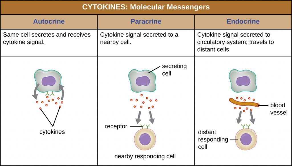 Summary of the modes of action of the 3 different types of cytokines.