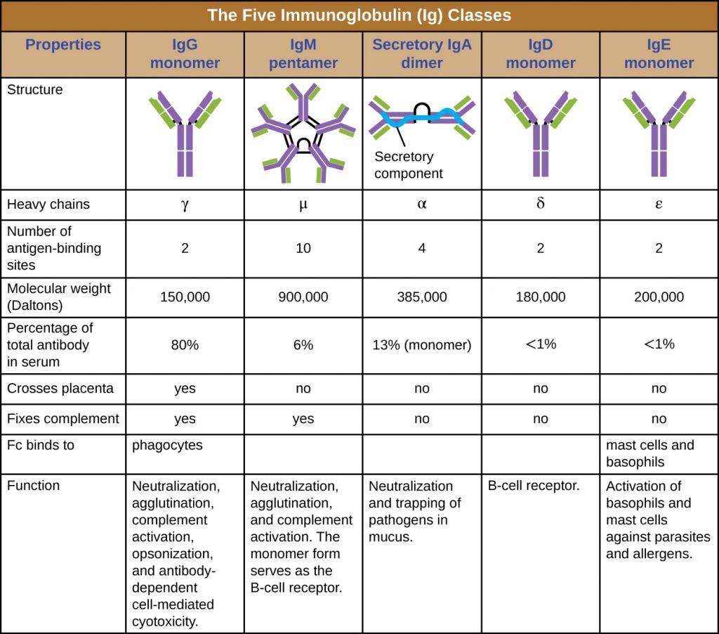 Table summarizing the properties of the 5 major immunoglobulin classes
