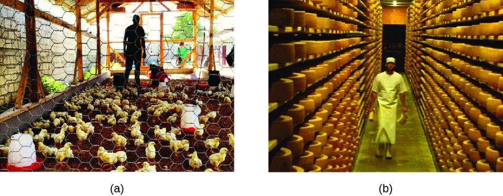 A) Photo of chickens in a coop. b) Photo of a worker in a warehouse.