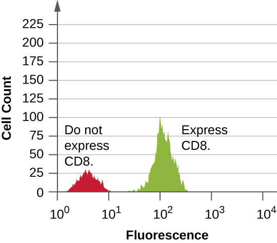 A graph with fluorescence on the X axis and Cell count on the Y axis. The first peak reaches approximately 30 and is labeled do not express CD8. The second peak reaches about 100 and is labeled express CD8.