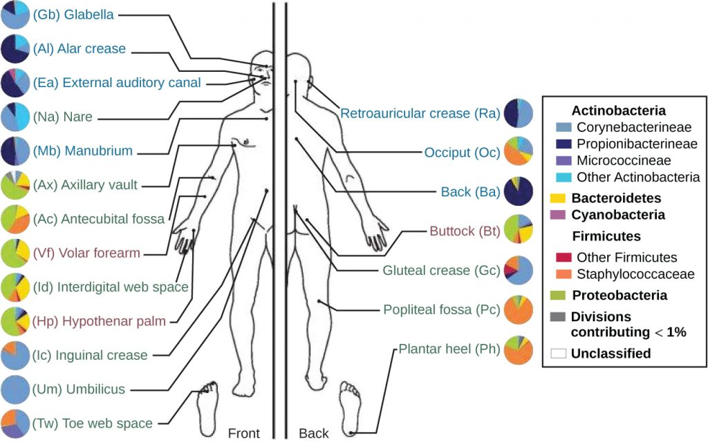 A diagram showing different regions of the body and the associated microbiota.