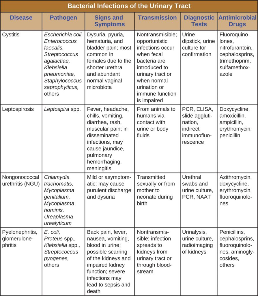 Table summarizing the causes of bacterial infections of the urinary tract, their signs and symptoms, mode of transmission, diagnostic tests and treatment