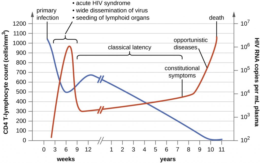 A graph depicting the clinical progression of CD4 T cells, clinical symptoms, and viral RNA during an HIV infection.