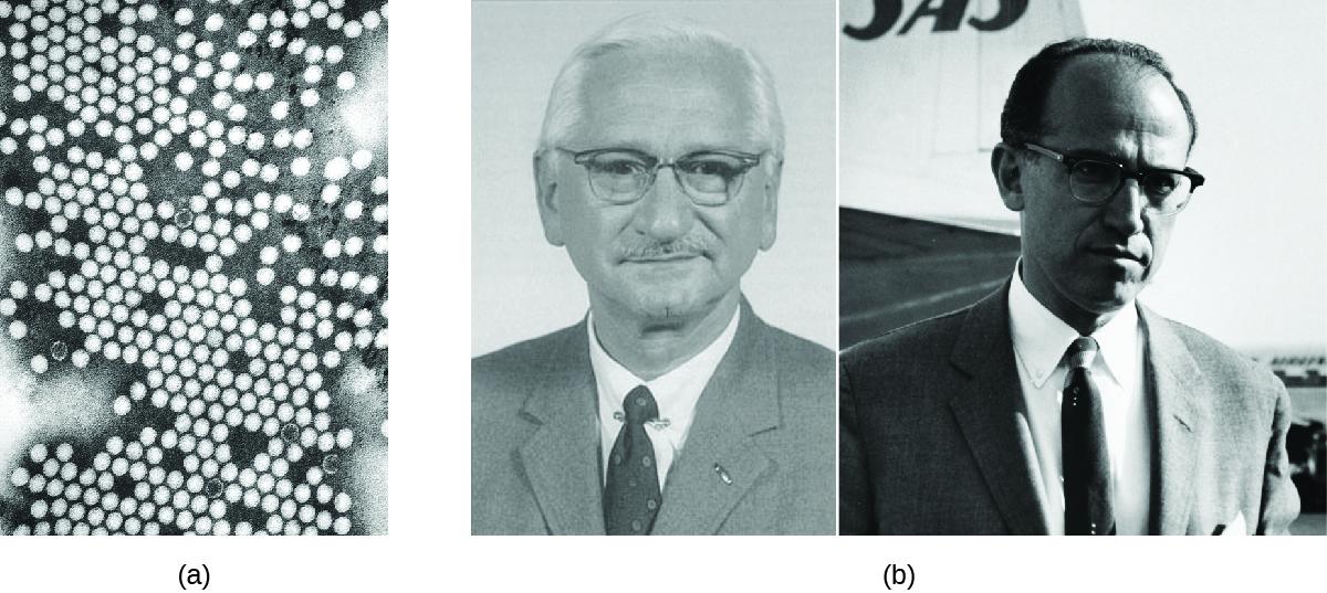 a) Micrograph of many round viral particles. B) Photos of Albert Sabin and Jonas Salk.