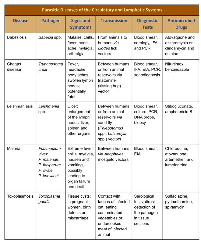 Table summarizing parasitic infections of the circulatory and lymphatic systems including signs and symptoms, modes of transmission, diagnostic tests and treatment