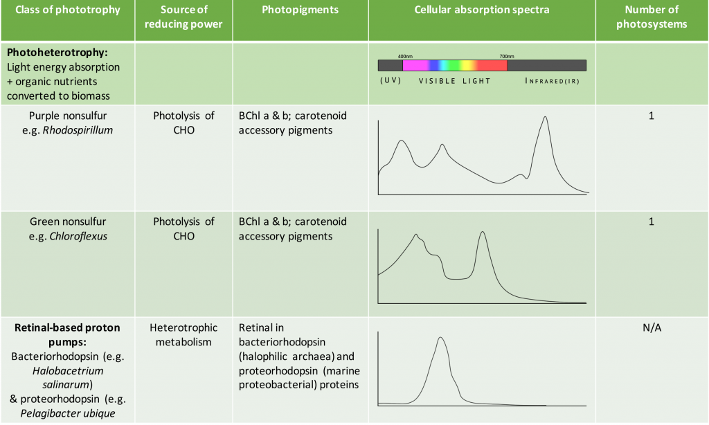 Table summarizing the properties of different bacterial (purple and green sulphurs, purple and green nonsulphurs, cyanobacteria, proteorhodopsin containing species) and archaeal (bacteriorhodopsin-containing halophiles) phototrophs and their photosystems.