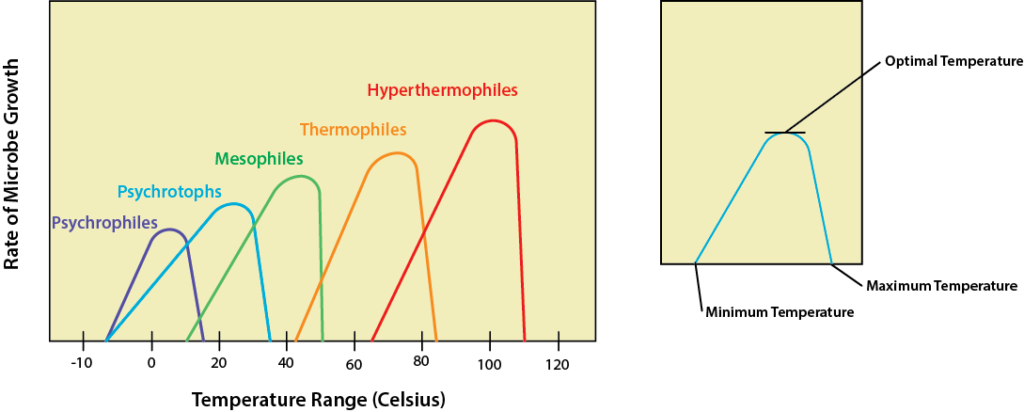 A graph with temperature (°C) on the X axis and growth rate of bacteria on the Y axis. The first bell curve is labeled psychrophile and peaks around 5-10°; it drops to 0 at -5 and 18°C. The next bell curve is labeled psychrotroph. It peaks at 25°; it drops to 0 at -5 and 35°C. Next is the curve for mesoophiles. It peaks around 40°C and drops to 0 at 10 and 45°C. The next bell curve is labeled thermophile; the peak is around 70°C and it drops to 0 at 40 and 82°C. The final bell curve is labeled hyperthermophile, with a peak at 100°, dropping to 0 at 65 and 110°C.