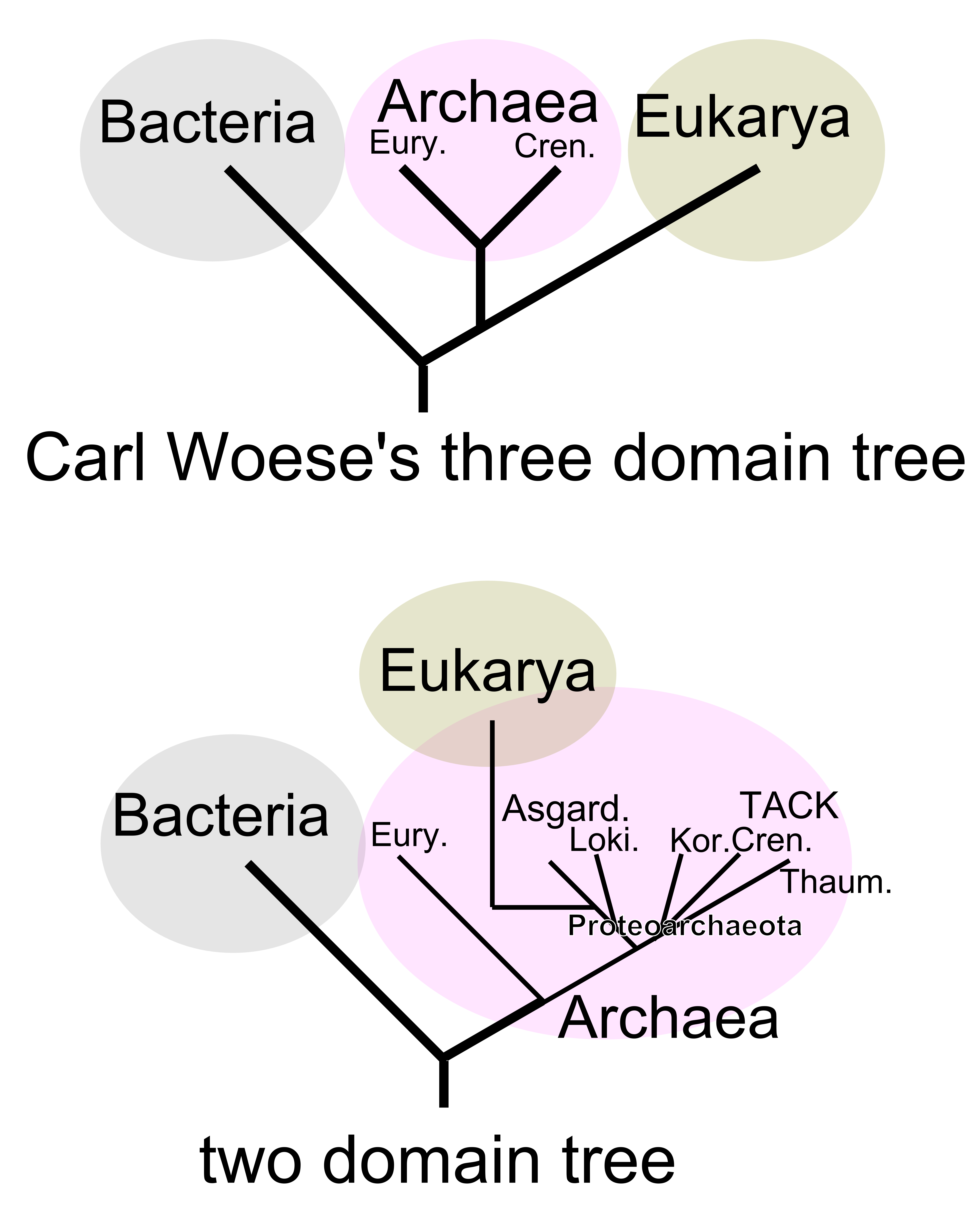 Figure depicting a 2-domain tree of life, in comparison to Woese's 3-domain tree of life. In the 2-domain tree, the eukaryotes are descended from the archaeal domain, rather than being a sister domain.