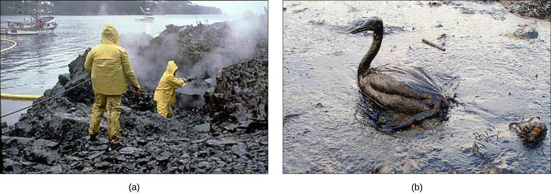 a) Photograph of workers spraying beaches as part of the cleanup following the Exxon Valdez spill. (b) Photograph of an oiled goose